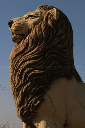 The old statue of a male lion stands proud at the new Lion and Safari Park near Johannesburg