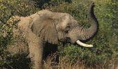 Pilanesberg National Park near Johannesburg