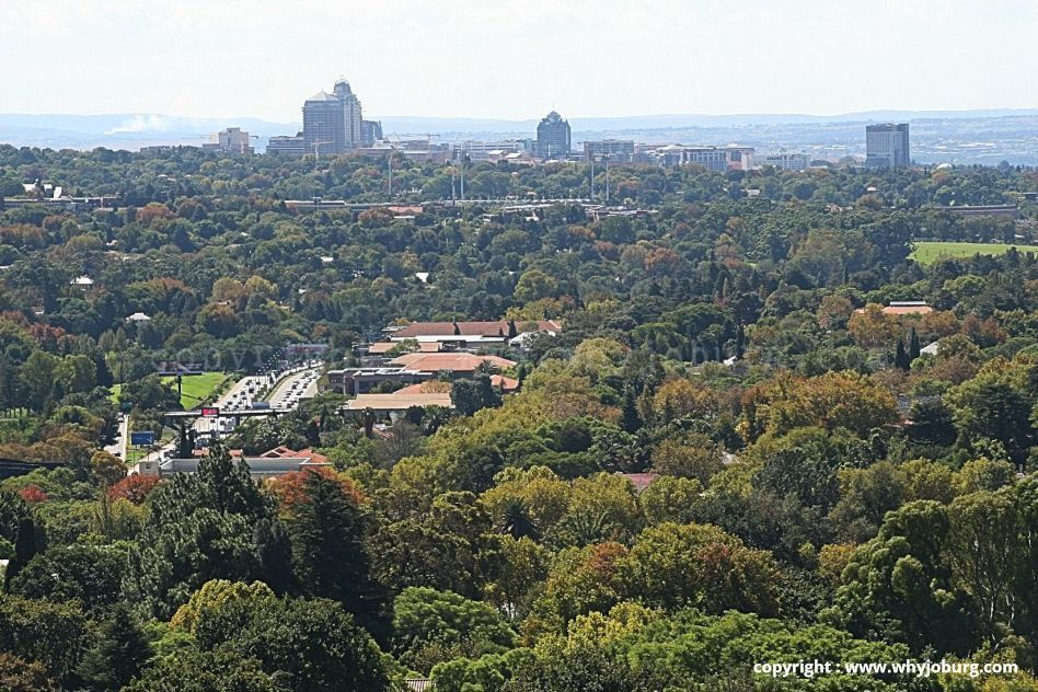 The tress of Johannesburg, looking north from Munro Drive